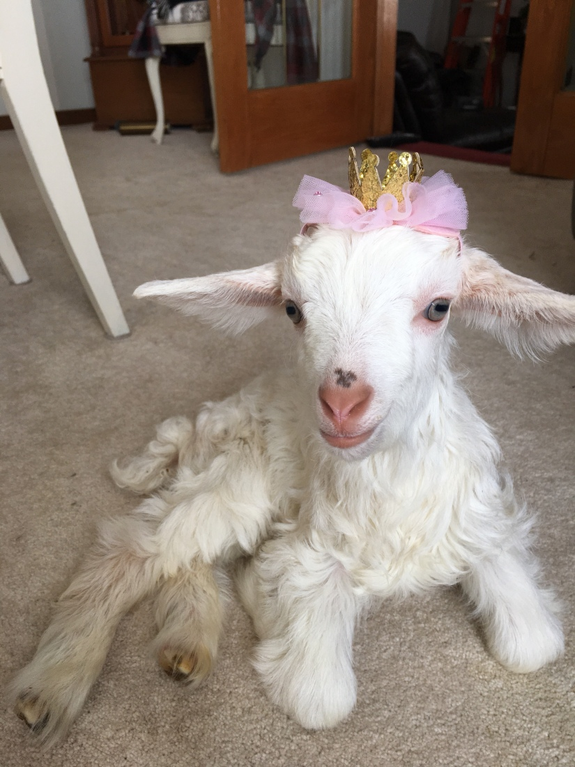 Meet the Residents – Black Goat Farm and Sanctuary